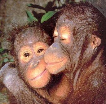monkeylove - Mga managhigugmaay - Love Talk