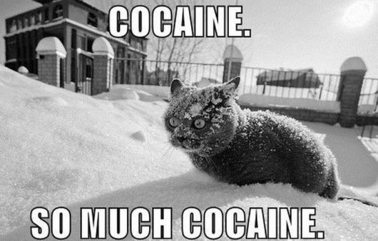 cocaincat1.jpeg
